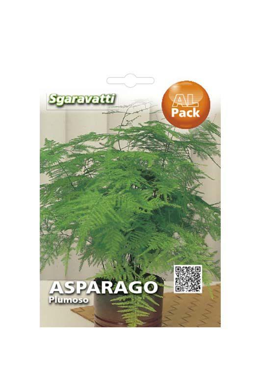 Semi di asparago plumoso