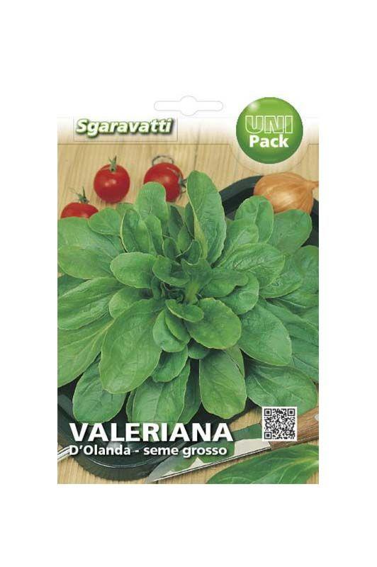 Semi di valeriana d'olanda seme grande