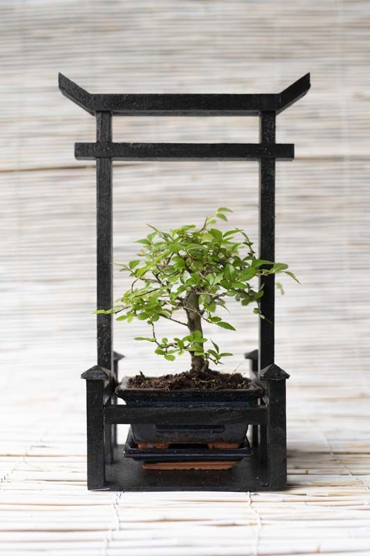 Bonsai misti con torre japponese