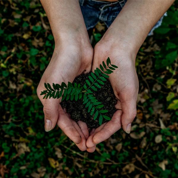 Tre consigli per un giardino sempre più eco-sostenibile