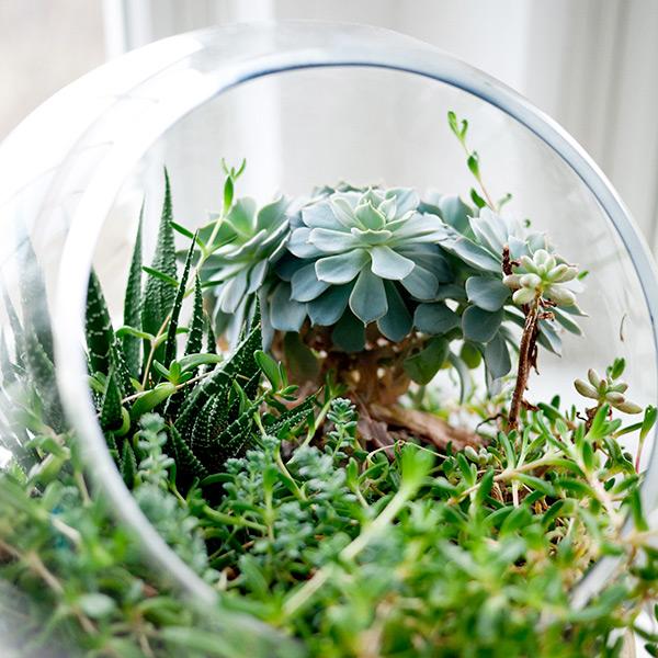 Terrarium, un vero e proprio giardino in miniatura