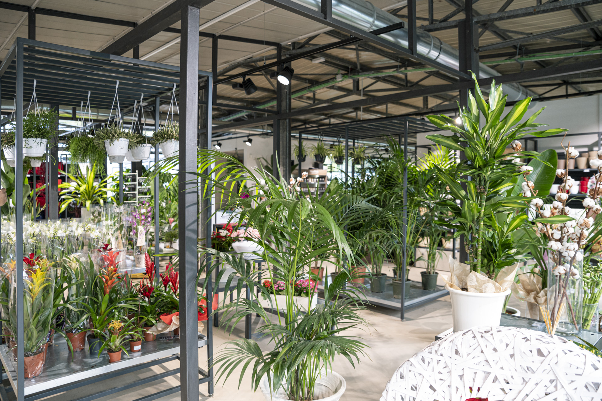 Horticultural City Garden Roma